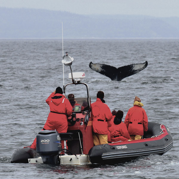 Whale-watching and Cruises