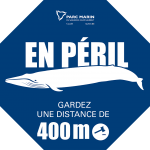 baleines-peril-stop