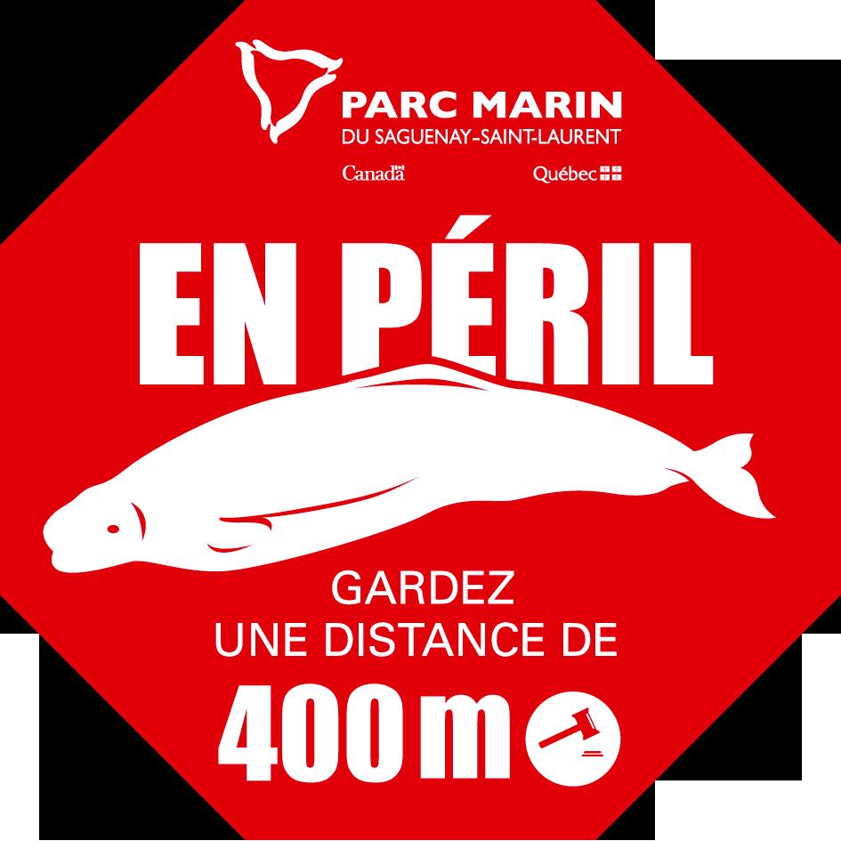 beluga-peril-stop