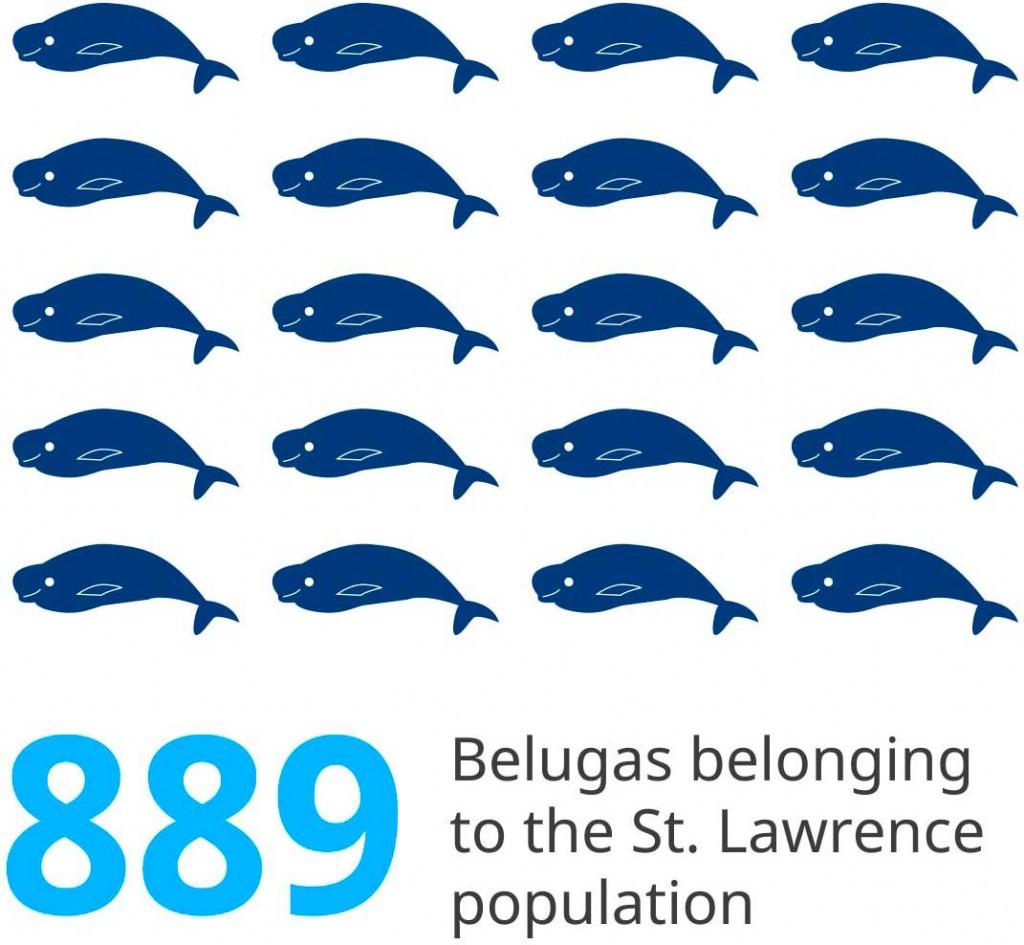 picto-population-belugas-en