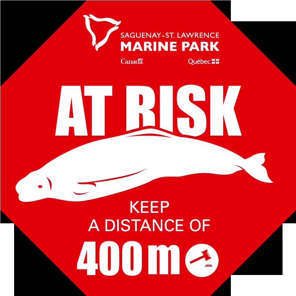 beluga-at-risk-stop