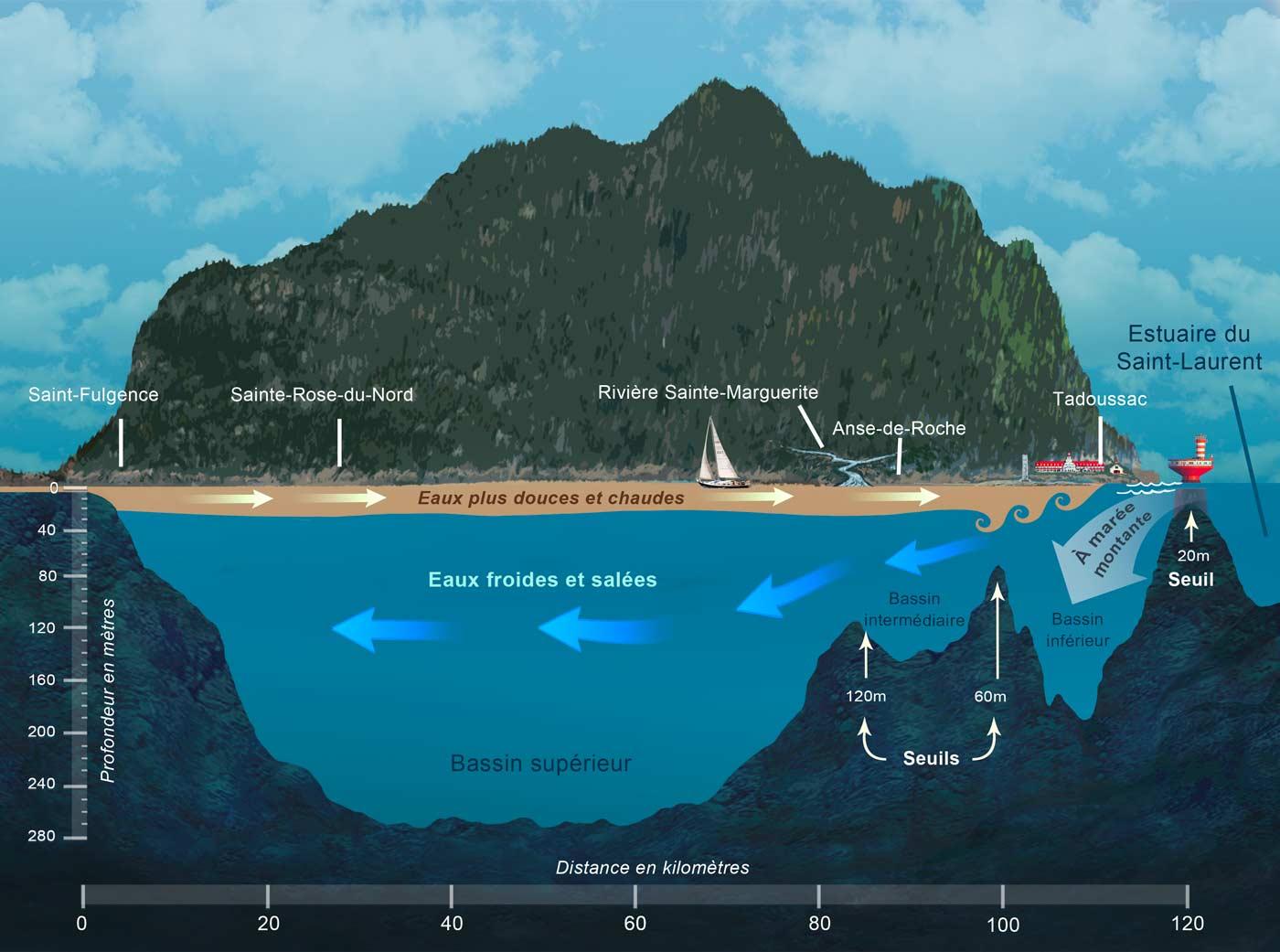 ecosysteme-coupedufjord
