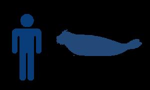 phoque-commun-bleu