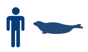 phoque-groenland-bleu