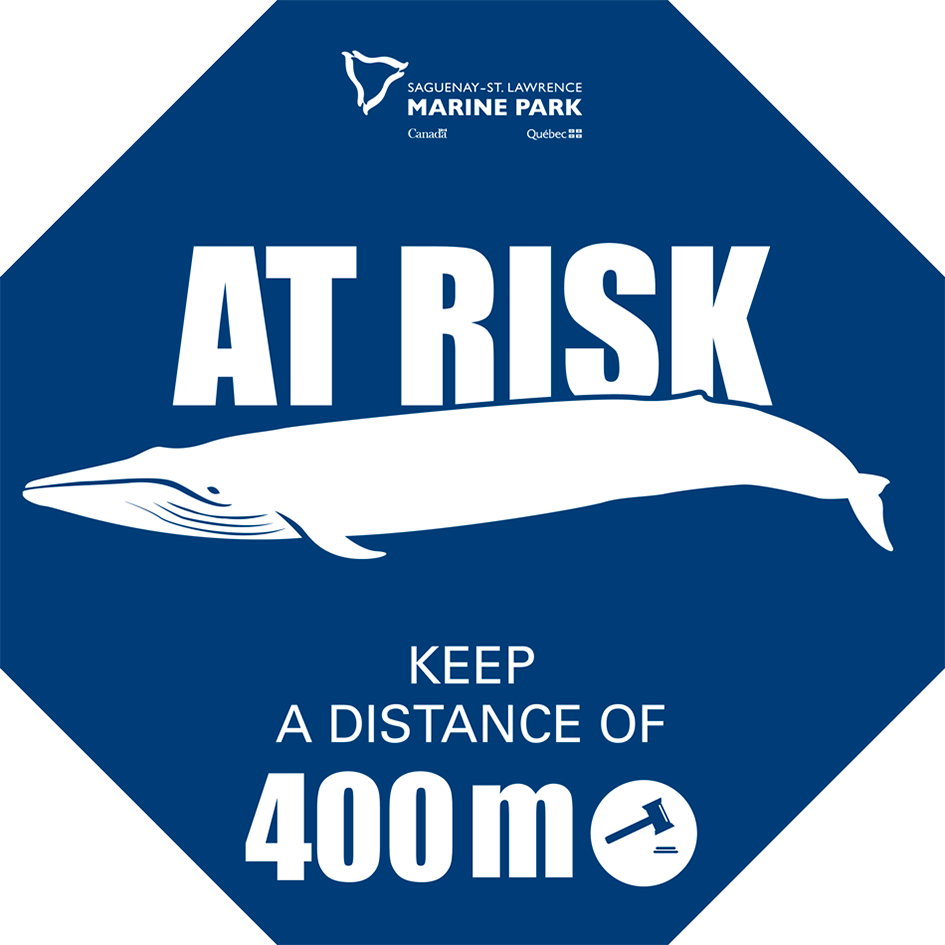 whale-at-risk-stop
